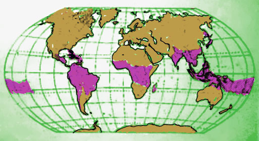 bamboo-world-map2