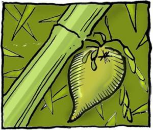 bamboo_fruit